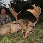 Mike and Vicky's fallow buck